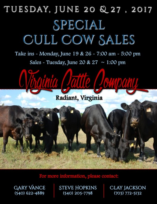Cull Cow Sale